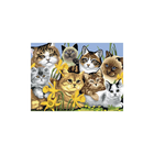 Royal (art supplies) . ROY Cats Montage - Paint By Number Kit