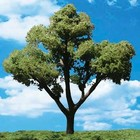 "Woodland Scenics . WOO EARLY LIGHT TREES 4""- 5"" (3)"