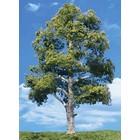 "Woodland Scenics . WOO Waters Edge Trees 7""- 8"" (2)"