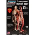 Lindberg . LND 1/6 TRANSPARENT HUMAN BODY
