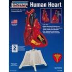 Lindberg . LND Human Heart