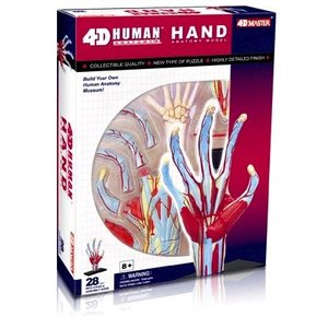 4D Vision Kits . FDV VISIBLE 4D HAND ANATOMY KIT