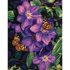 Dimensions . DMS Clematis & Butterflies 11 X 14 Paint By Number