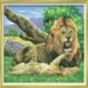KSG Limited . KSG SEN PAINT BY #'S LIONS