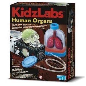 4M Project Kits . FMK Human Organs Body Science Kit