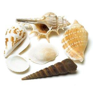 Wedding Star . WST Decorative Shells 100gr