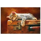 Trefl (puzzles) . TRF Sweet Dreams 260 pc Puzzle