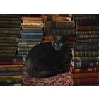 Cobble Hill . CBH Library Cat 1000Pc Puzzle