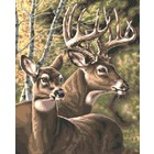 Plaid (crafts) . PLD Deer Pair Paint by Number