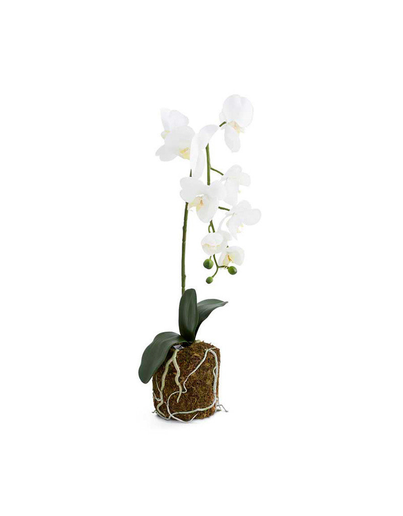 Faux Orchid in Moss Pot