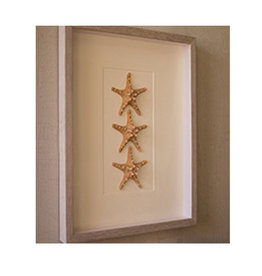 Set of 3 Starfish Framed Under Glass