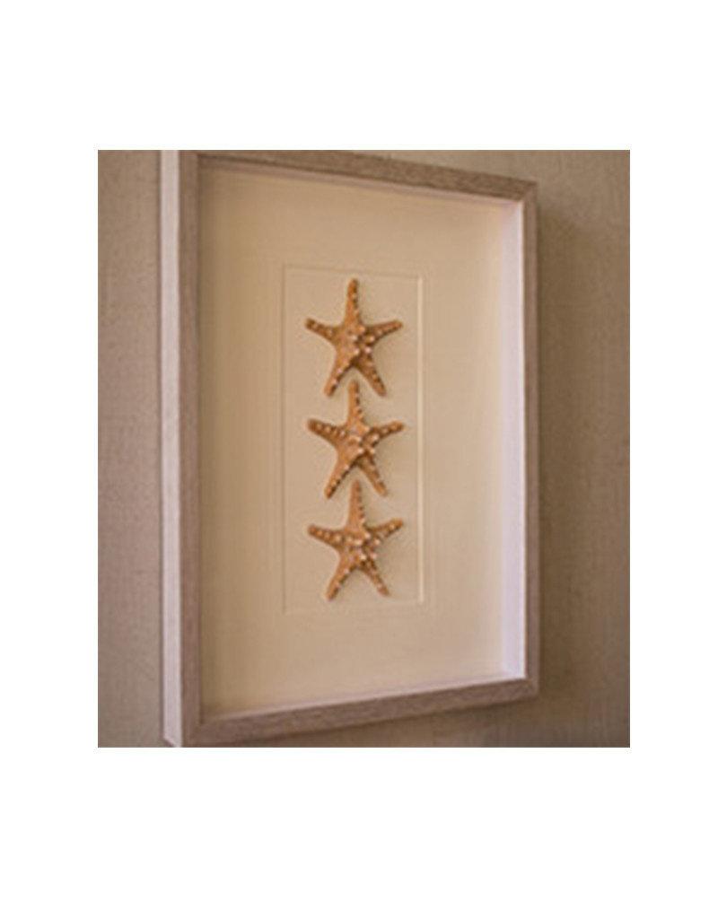 Set of 3 Starfish Framed Under Glass