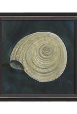 The Artwork of Kolene Spicher Seashell Framed Print