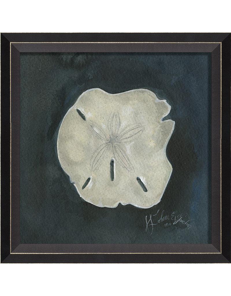 Sand Dollar Seashell Framed Print