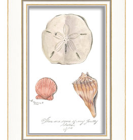 The Artwork of Kolene Spicher Three Seashells Framed Print