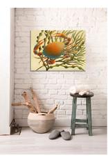 Lady Crab Canvas Print