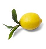 4.5 inch Lemon w/ Foliage
