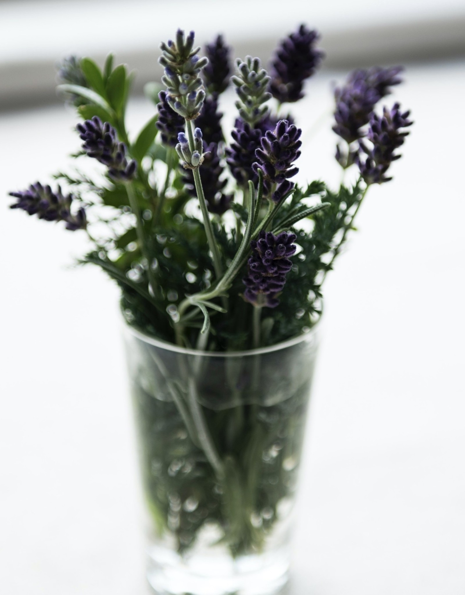 ROSEMARY LAVENDER FUSED OLIVE OIL