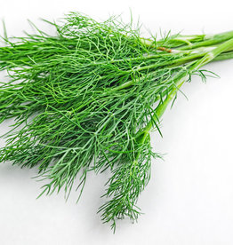 FRESH DILL EXTRA VIRGIN OLIVE OIL