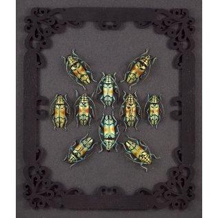Sulawesi Beetles