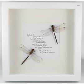 Dragonflies, Canada