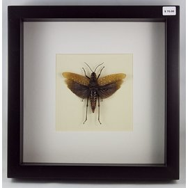 Grasshopper, Indonesia