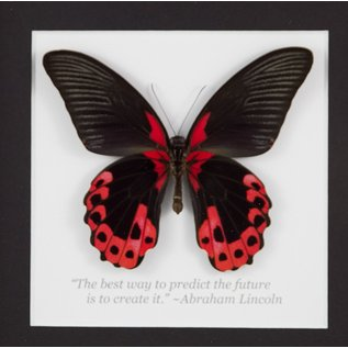 The Scarlet Mormon (verso), Philippines