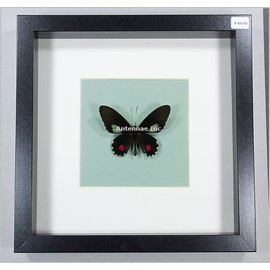 Butterflies and Moths With An Irridescent Twist
