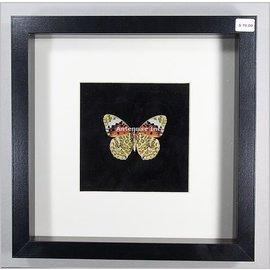 Butterflies and Moths Children's Butterfly