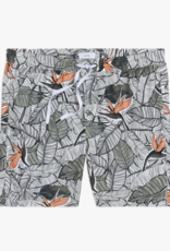 Onia Birds of Paradise Palm Deep Sage Charles 7´