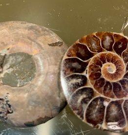 Ammonite Brown Pair Specimen- Madagascar