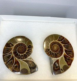 Ammonite, Large Brown Pair Specimen- Madagascar