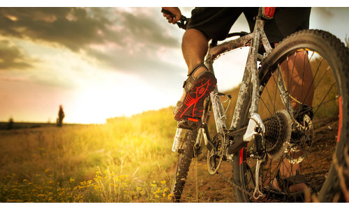 Our Bicycle Brands
