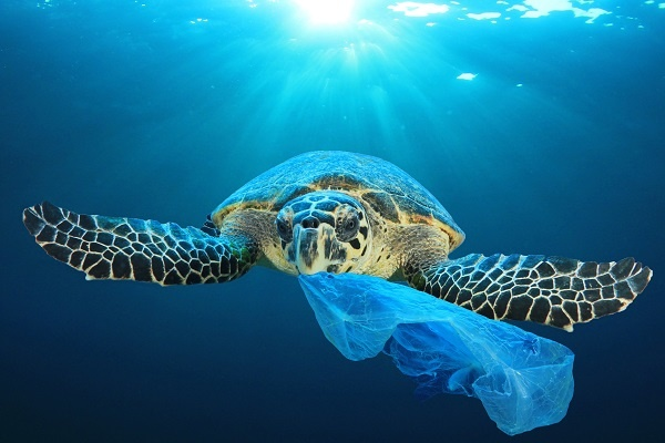 Sea turtle with plastic bag in mouth (Shutterstock)