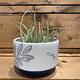 Linnaea Plant Pot