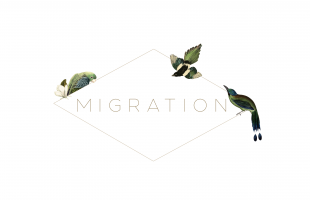 Migration Boutique