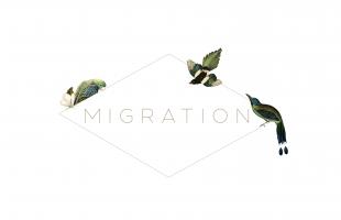 Migration Boutique