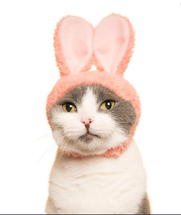 Clever Idiots Inc. Kitan Club: Cat Cap Blind Box/ Rabbit