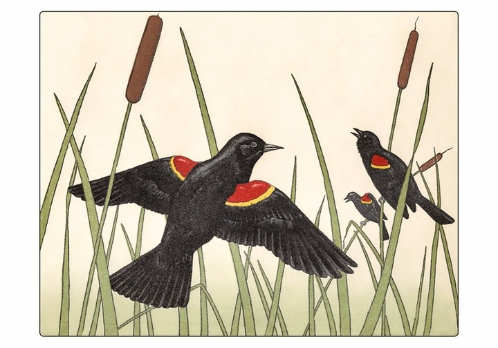 Pomegranate Boxed Notecards/ Maurice R. Bebb Red-Winged Blackbirds