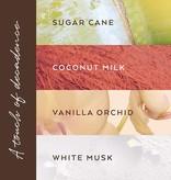 Margot Elena / Burwell TokyoMilk Shea Butter Lotion/ Let Them Eat Cake