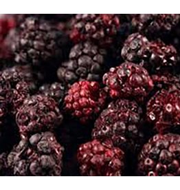 Amifruit Amifruit - Freeze dried - Blackberry - 6.4oz, AMI556-R