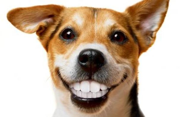 How To Keep Your Pets Teeth Clean Naturally