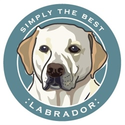 Paper Russells Simply The Best Yellow Labrador Car Magnet