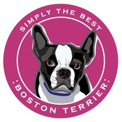 Paper Russells Simply The Best Boston Terrier Car Magnet