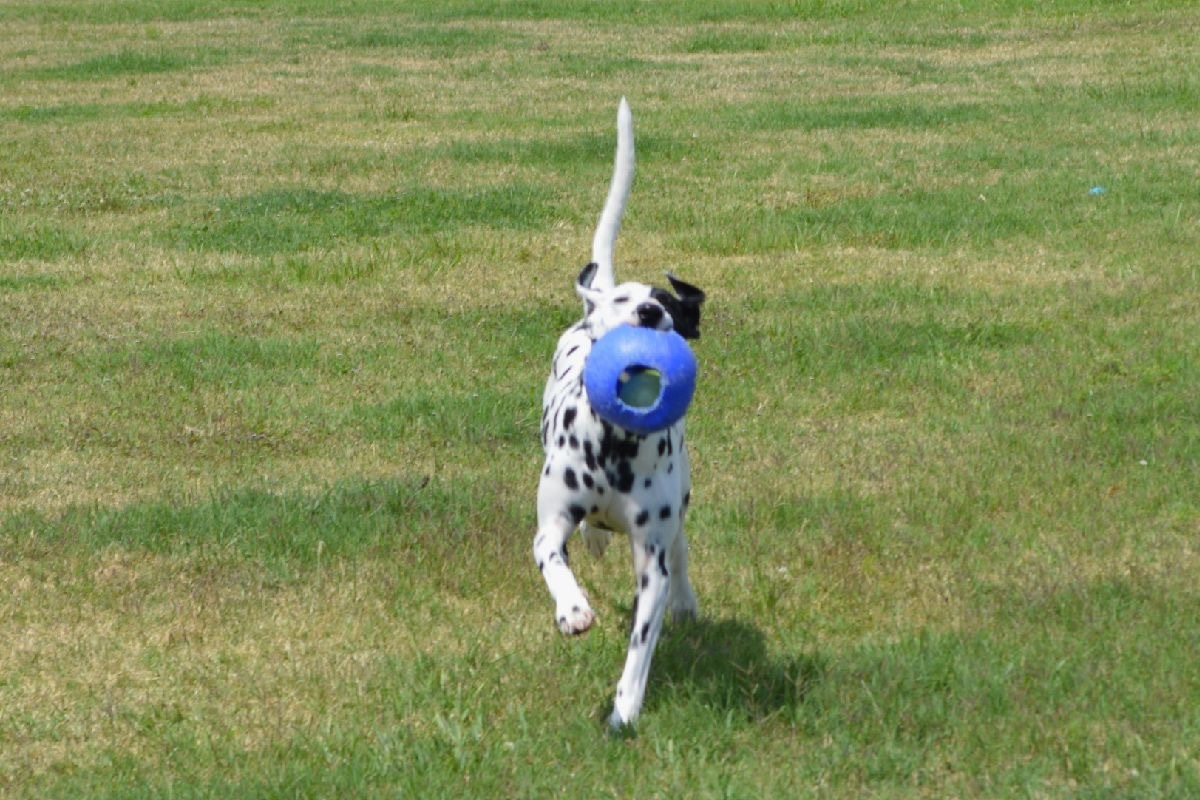 How to Keep Joints Healthy for a Dog or Cat