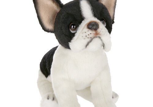 Oliver the French Bulldog