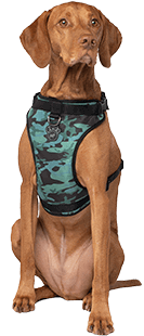 Canada Pooch Harnais Everything Harness, Camo