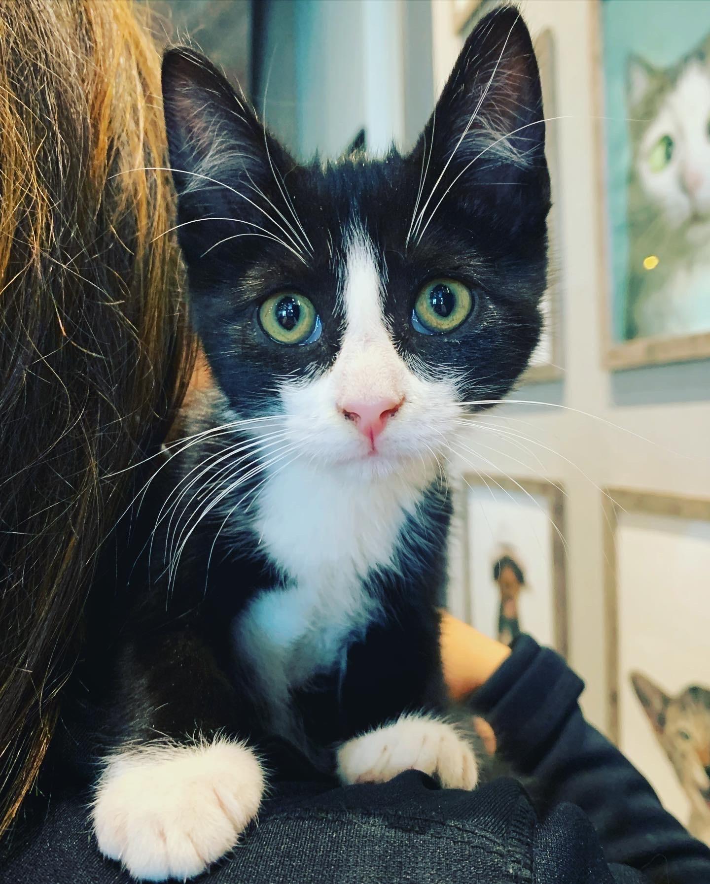 Adoption Michi