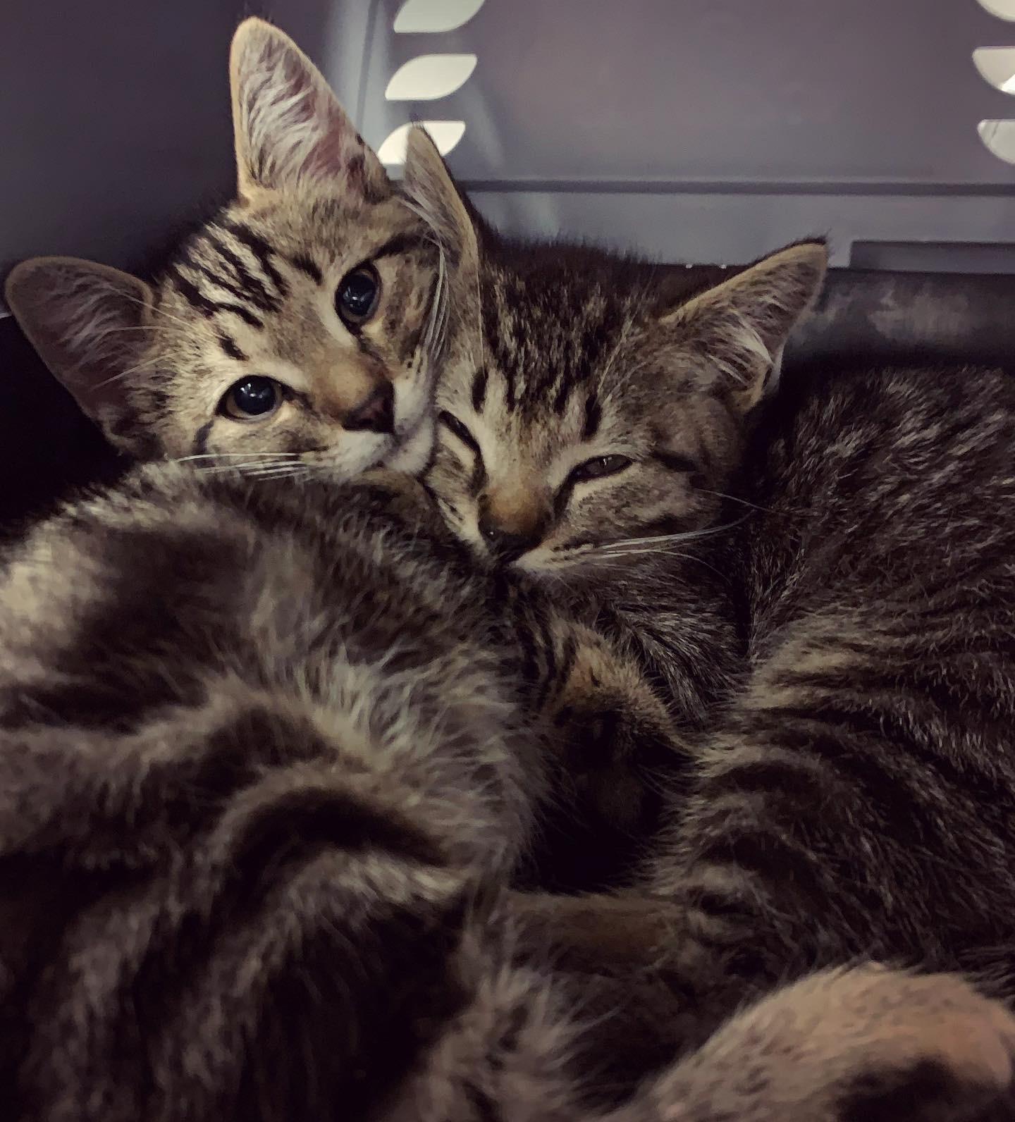 Adoption Tchaki et Tchako