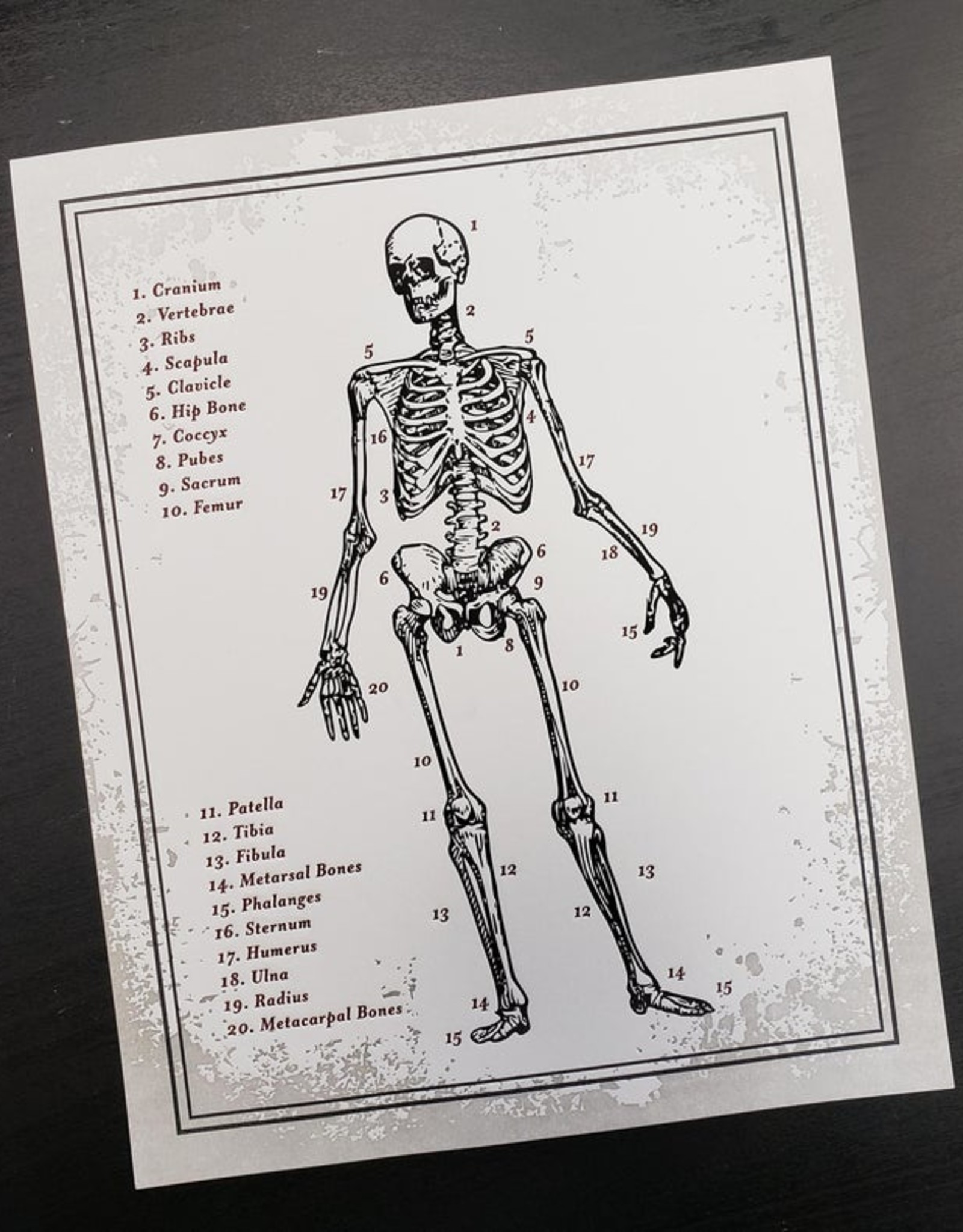 Skylab Letterpress 8x10 Anatomy Print by Skylab Letterpress